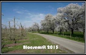 Bloesemrit 2015