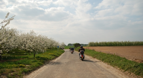 Bloesemrit 2011 50