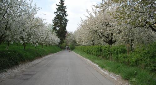 Bloesemrit 2011 54