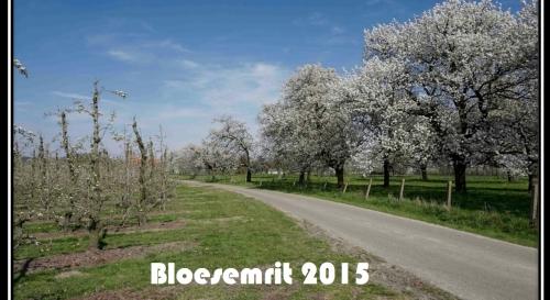 Bloesemrit 2015 01